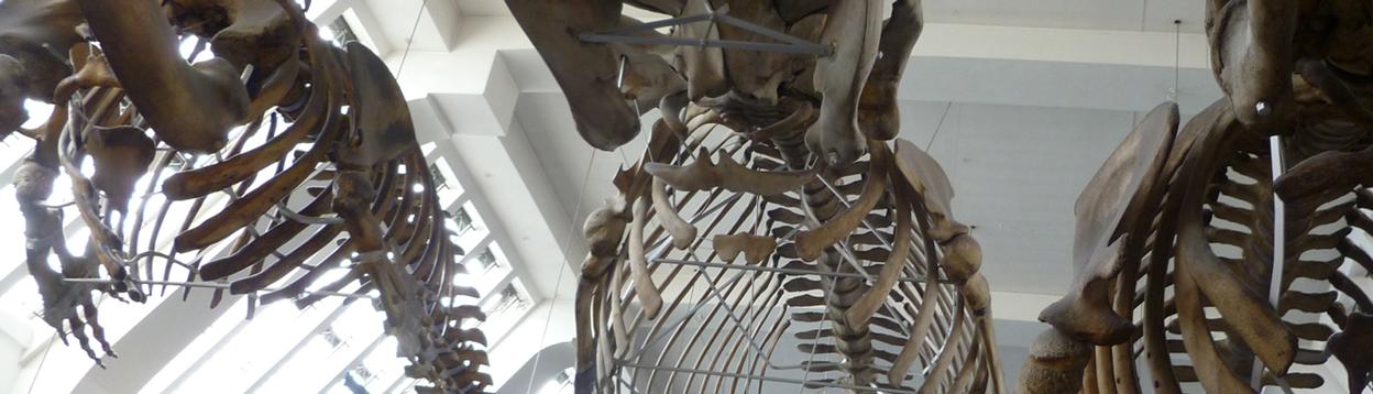 Bones-550